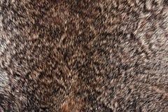 Textura da pele do coelho fotos de stock