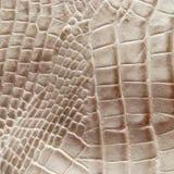 Textura da pele do crocodilo Fotografia de Stock