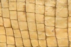 Textura da pele do crocodilo Imagem de Stock Royalty Free
