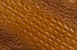 Textura da pele do crocodilo de Brown Imagem de Stock Royalty Free