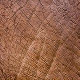 Textura da pele do elefante Fotografia de Stock