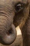 Textura da pele do elefante Imagens de Stock Royalty Free