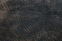 Textura da pele do elefante Imagens de Stock