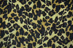 Textura da pele do leopardo do close up imagens de stock royalty free