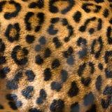 Textura da pele do leopardo para o fundo Imagem de Stock Royalty Free