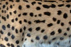 Textura da pele do Serval para o fundo imagens de stock royalty free