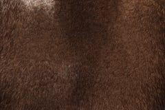 A textura da pele do vison Imagens de Stock Royalty Free