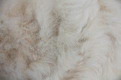 Textura da pele dos carneiros Foto de Stock Royalty Free