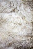 Textura da pele dos carneiros brancos Fotografia de Stock Royalty Free