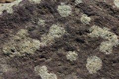 Textura da rocha do jardim Fotos de Stock Royalty Free