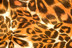 Textura da seda do leopardo Foto de Stock Royalty Free