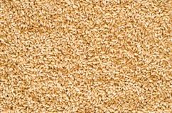 Textura da semente do trigo Imagens de Stock Royalty Free