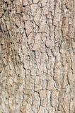 Textura da superfície áspera de árvore de casca fotografia de stock