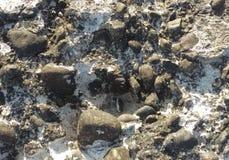 Textura da superfície de um muro de cimento velho Fotografia de Stock Royalty Free