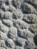 A textura da superfície da parede fotografia de stock