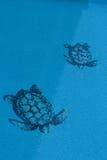 Textura da tartaruga na associação Imagens de Stock