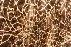 A textura da tela da cópia listra o girafa Foto de Stock