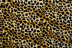 A textura da tela da cópia listra o leopardo para o fundo Fotos de Stock