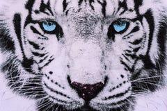 A textura da tela da cópia listrou a cara branca do tigre Imagens de Stock