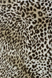 A textura da tela da cópia listrou o leopardo para o fundo Fotografia de Stock Royalty Free
