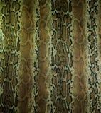 A textura da tela listra o couro da serpente para o fundo Imagens de Stock
