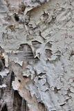 Textura da tela rasgada velha na superfície de madeira Imagens de Stock Royalty Free