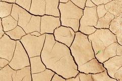 Textura da terra que se rachou de um calor fotografia de stock royalty free