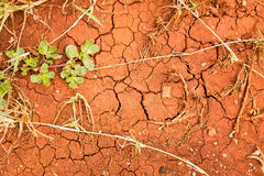 Textura da terra rachada, lama seca com folhas Imagens de Stock Royalty Free