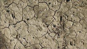 Textura da terra seca vídeos de arquivo