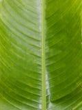 A textura da textura verde do vertical da folha Imagem de Stock