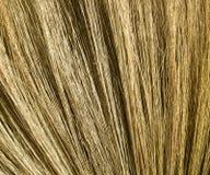 Textura da vassoura de Drongamaporngry Fotografia de Stock