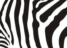 Textura da zebra ilustração royalty free