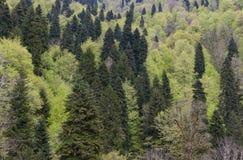 Textura das árvores Imagens de Stock