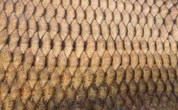 Textura das escalas de peixes Fotos de Stock Royalty Free