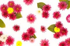 A textura das flores e das folhas Imagem de Stock Royalty Free