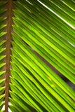 Textura das folhas fotografia de stock