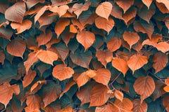 Textura 3 das folhas Fotografia de Stock