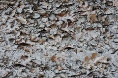 Textura das folhas imagem de stock royalty free