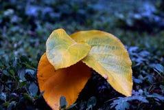 A textura das folhas amarelas Fotos de Stock Royalty Free