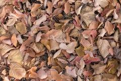 Textura das folhas caídas em cores deprimidos Imagem de Stock