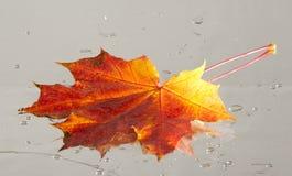 Textura das folhas de bordo do outono Fotos de Stock Royalty Free