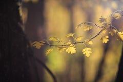 Textura das folhas de outono Fotografia de Stock Royalty Free