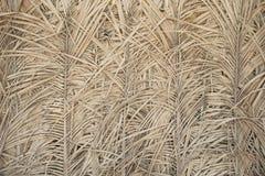 Textura das folhas de palmeira Fotografia de Stock
