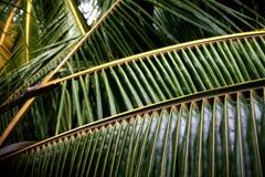 Textura das frondas da palma fotografia de stock royalty free