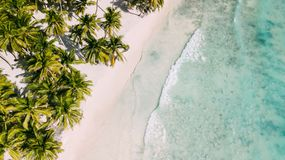 Textura das palmas e do mar fotos de stock royalty free