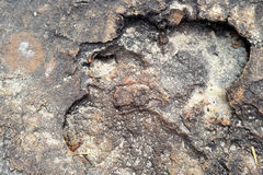 Textura das pedras Foto de Stock