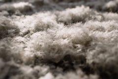 A textura das penas de uma cisne Fotografia de Stock Royalty Free