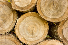Textura de árboles cortados Imágenes de archivo libres de regalías