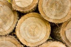 Textura de árvores cortadas Imagens de Stock Royalty Free
