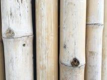 Textura de bambú del árbol Imagen de archivo